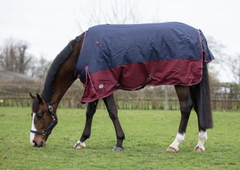 JHL Jumpers Horseline Mediumweight Turnout Rug Navy/Burgundy